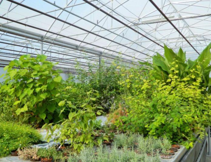 Serre - Jardin botanique