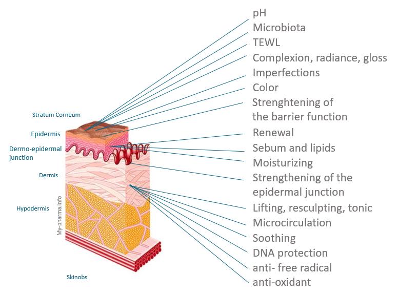 SKINOBS 皮肤成分 - 软件 - 产品信息